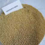 Amaranth Seeds (1)