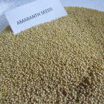 Amaranth Seeds (2)
