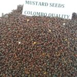 MUSTARD COLOMBO QUALITY (1)